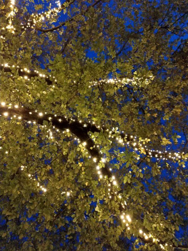 boom verlichting winter